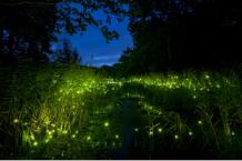 firefliesinthedark